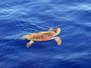 Želva caretta caretta v moři u Zakynthosu